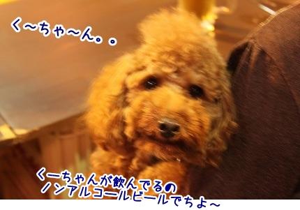 IMG_1978_20111019224825.jpg