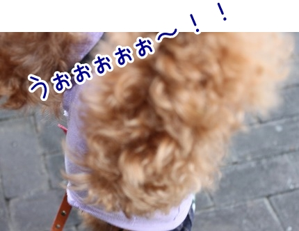 IMG_7081_20111205215339.jpg