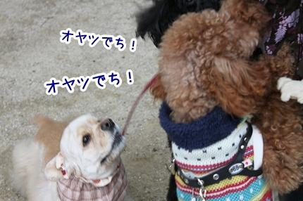IMG_7142_20111214124632.jpg
