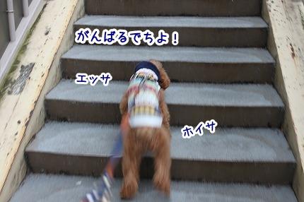 IMG_7147_20111214124632.jpg