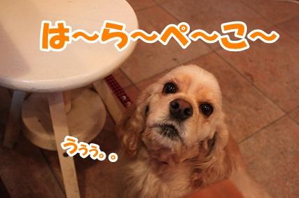 IMG_7221_20111220134946.jpg