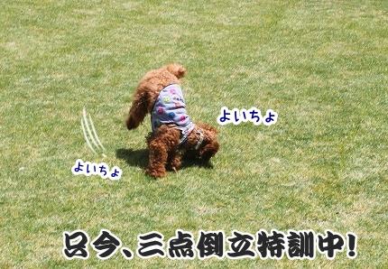 IMG_9576-crop.jpg