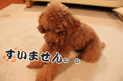 IMG_9908_20120118221249.jpg