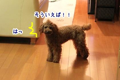 IMG_9909.jpg