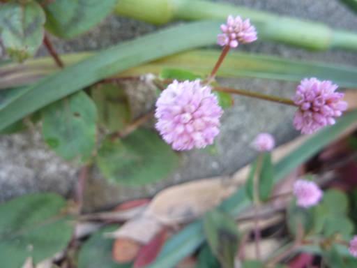 20101128・狭山湖散歩 04