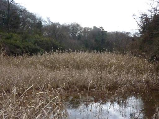 20101219・奥狭山湖01