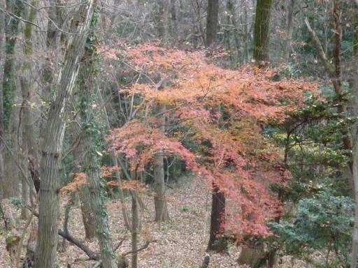 20101219・奥狭山湖05