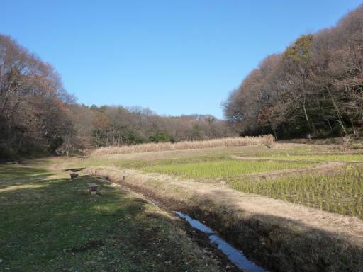 20101219・里山06