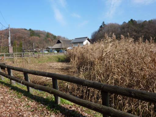 20101219・里山02