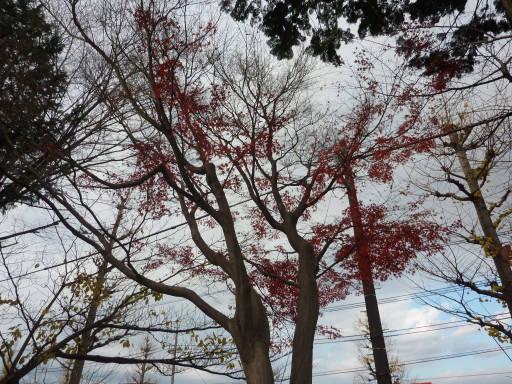 20101219・浅間山02