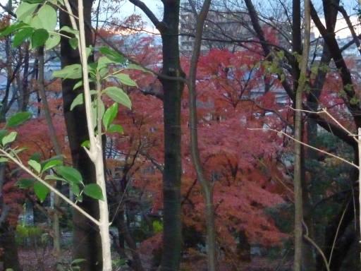 20101219・浅間山23