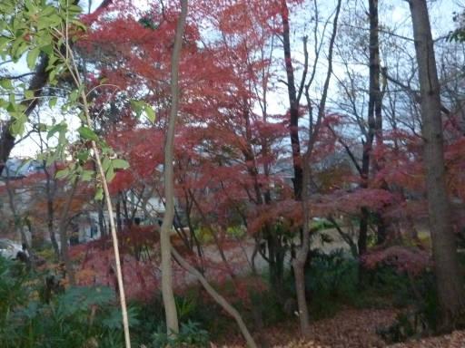 20101219・浅間山22