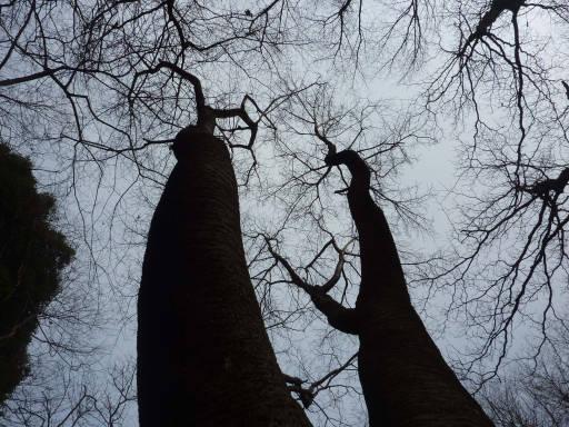 20110206・空3・続自然観察