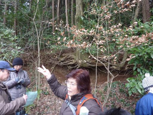 20100220・自然観察会17・ヤマコウバシ