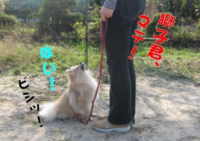 獅子丸・マテ