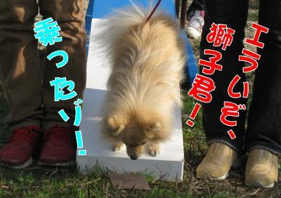 獅子丸・シーソー3