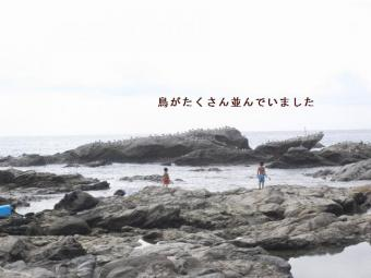 2010825tori.jpg