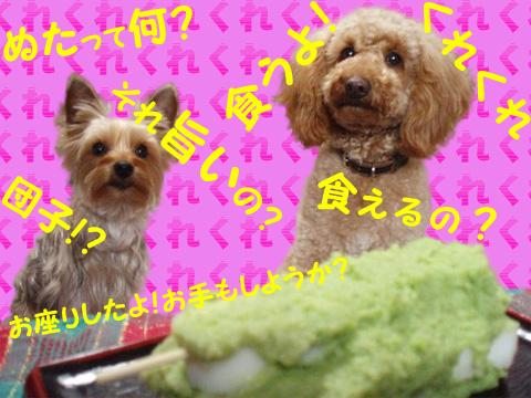 P3240049_pt.jpg