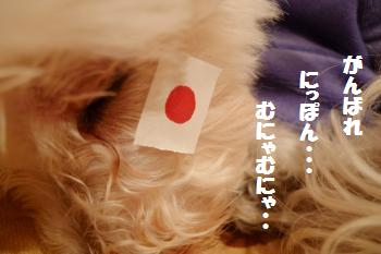 P1010242_c.jpg