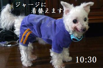 P1010313_c.jpg