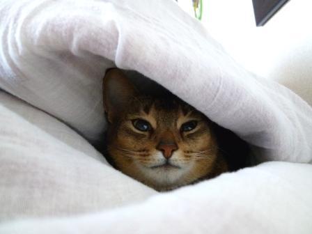 お昼寝したいんだけど…