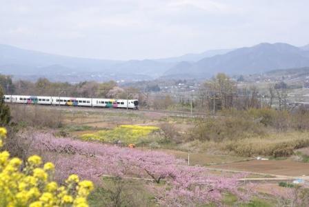 桃の花と中央線