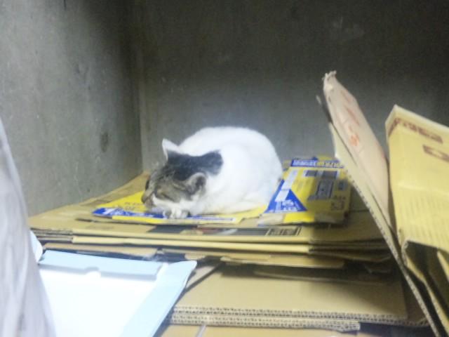 ごみ置き場の猫