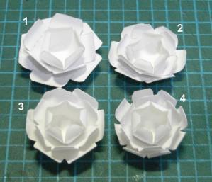 20110807_flower03.jpg