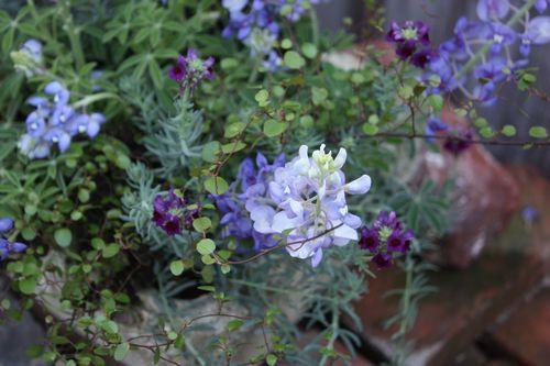 T's Garden Healing Flowers‐春の青系の寄せ植えⅡ