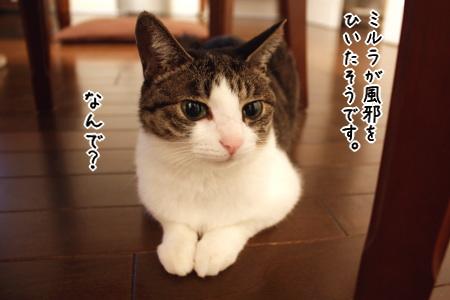 mirura、風邪をひく