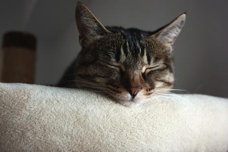眠いのよ・・・・