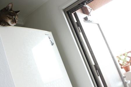 窓を開ければ・・・