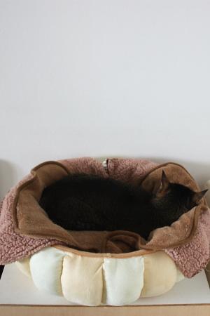 これはちびのベッド