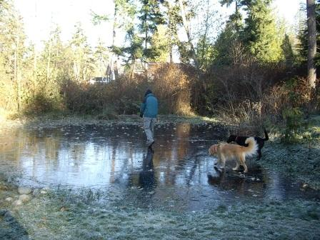 Walking on Icey-pond