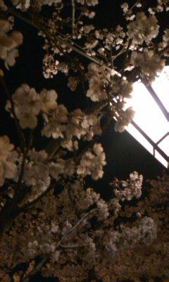 hanami20102.jpg