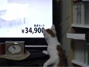 テレビ購入2