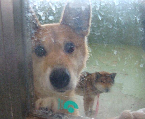 003収容犬