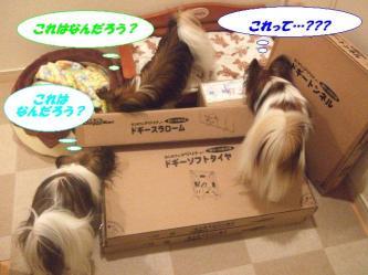 02-03_20091202091032.jpg
