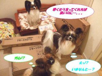 02-07_20091202091113.jpg