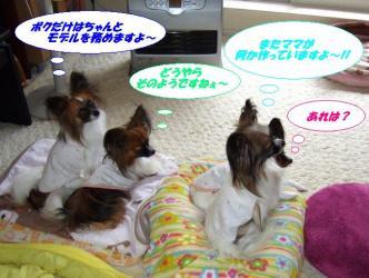 10-02_20091211105332.jpg