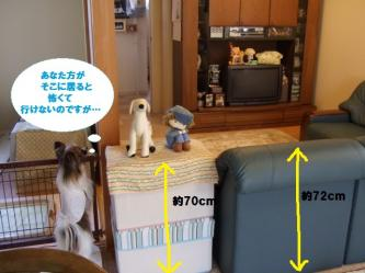 11-02_20100112165531.jpg