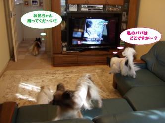 11-04_20100112153407.jpg