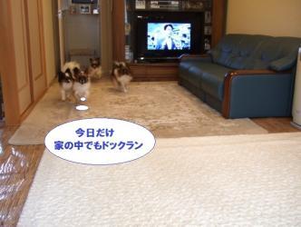 11-08_20100112153503.jpg