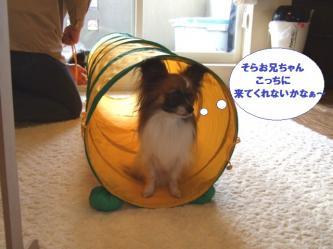 11-11_20100112153544.jpg