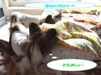 17-03_20091218001351.jpg