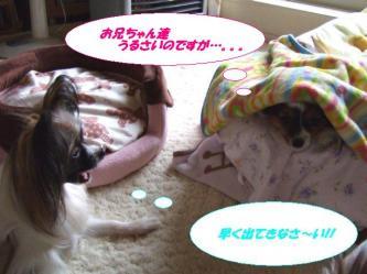 17-08_20091218001442.jpg