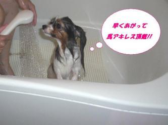 27-09_20091230091723.jpg