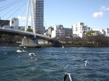 大川とカモメ