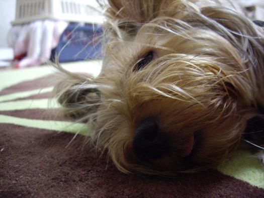 扇風機の前でいつも寝てます。