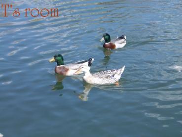 010_20100409161314.jpg